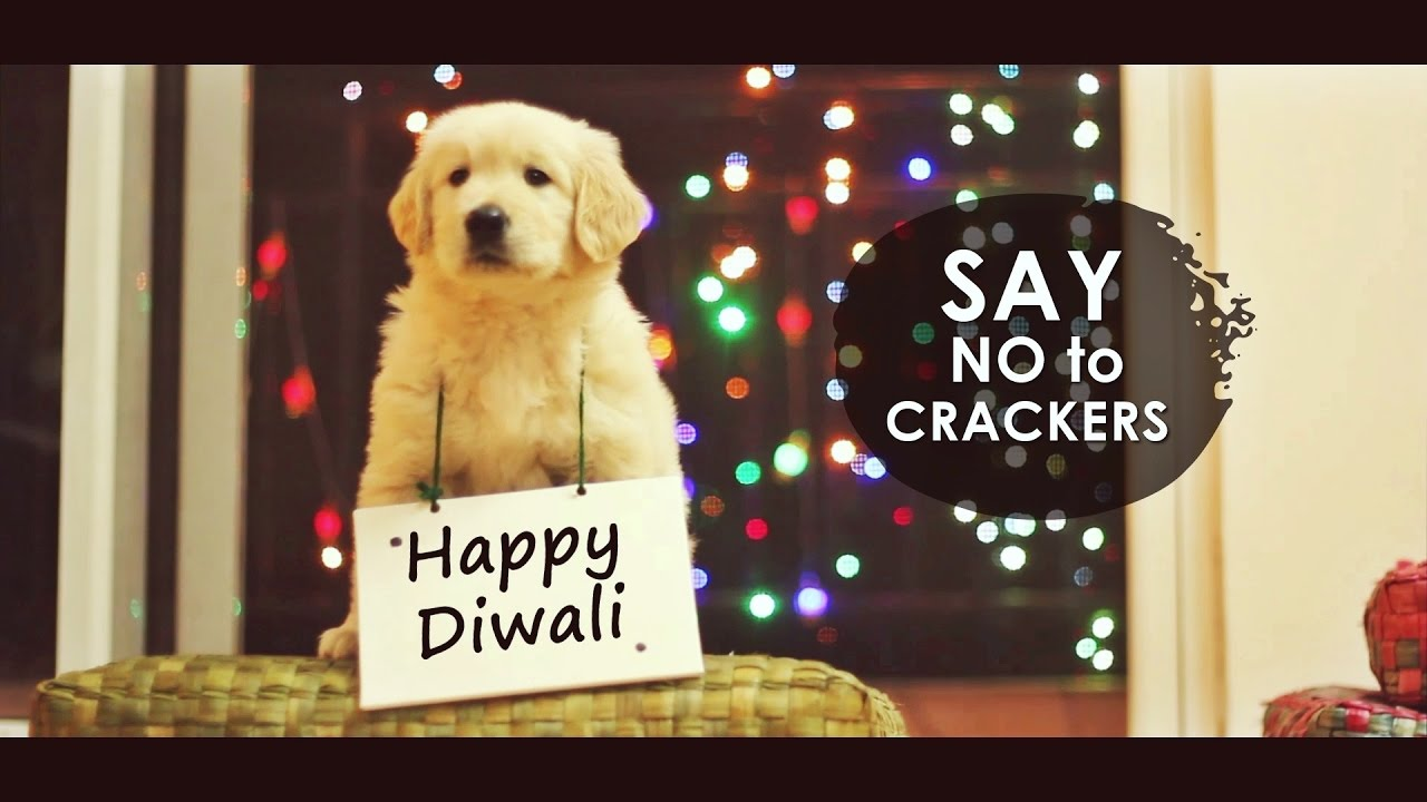 Celebrate A Pet-Friendly Diwali This Year With Your Family